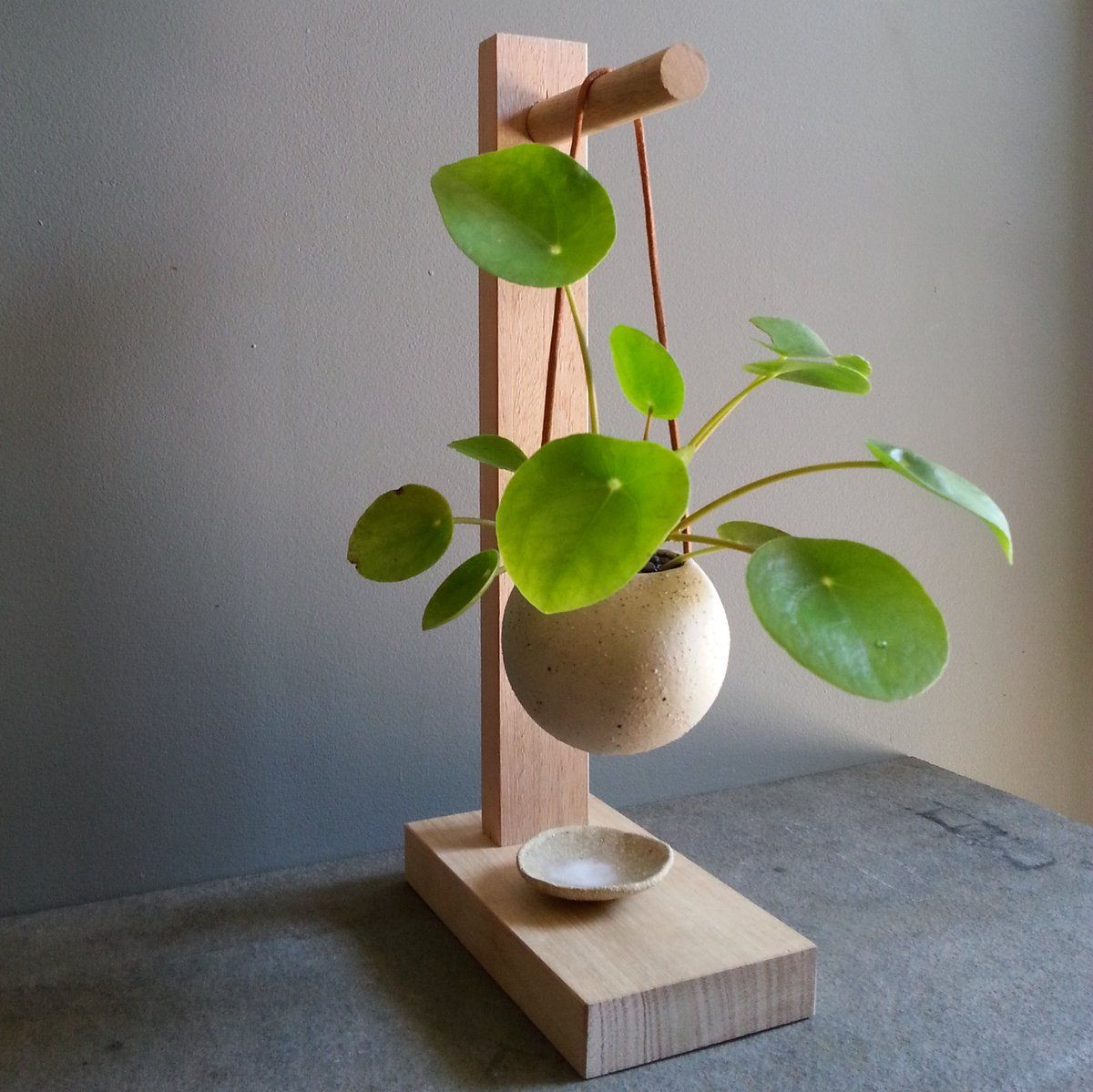 hanging glass vase with stand of greenhaus projects design craft house plants pinterest with hanging pilea in mixed clay mudpot planter with leather strapping on australian hardwood timber s