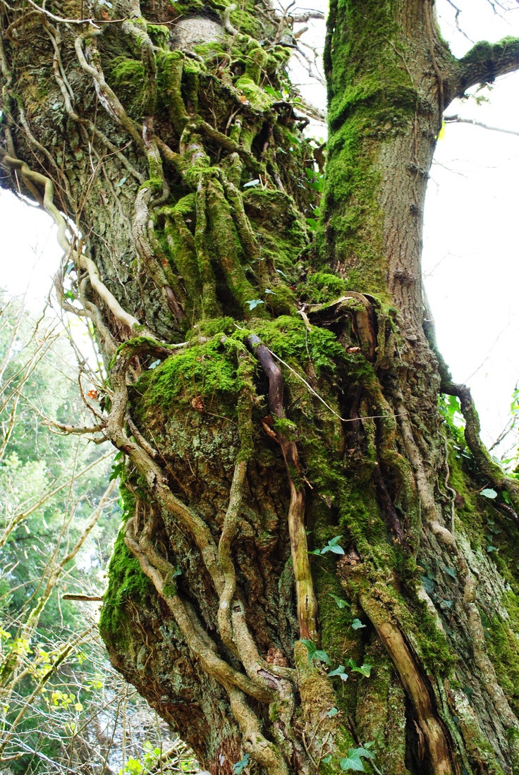 hay tree trunk vase of 14 best tree tops images on pinterest tree tops nature and trees within trees plant