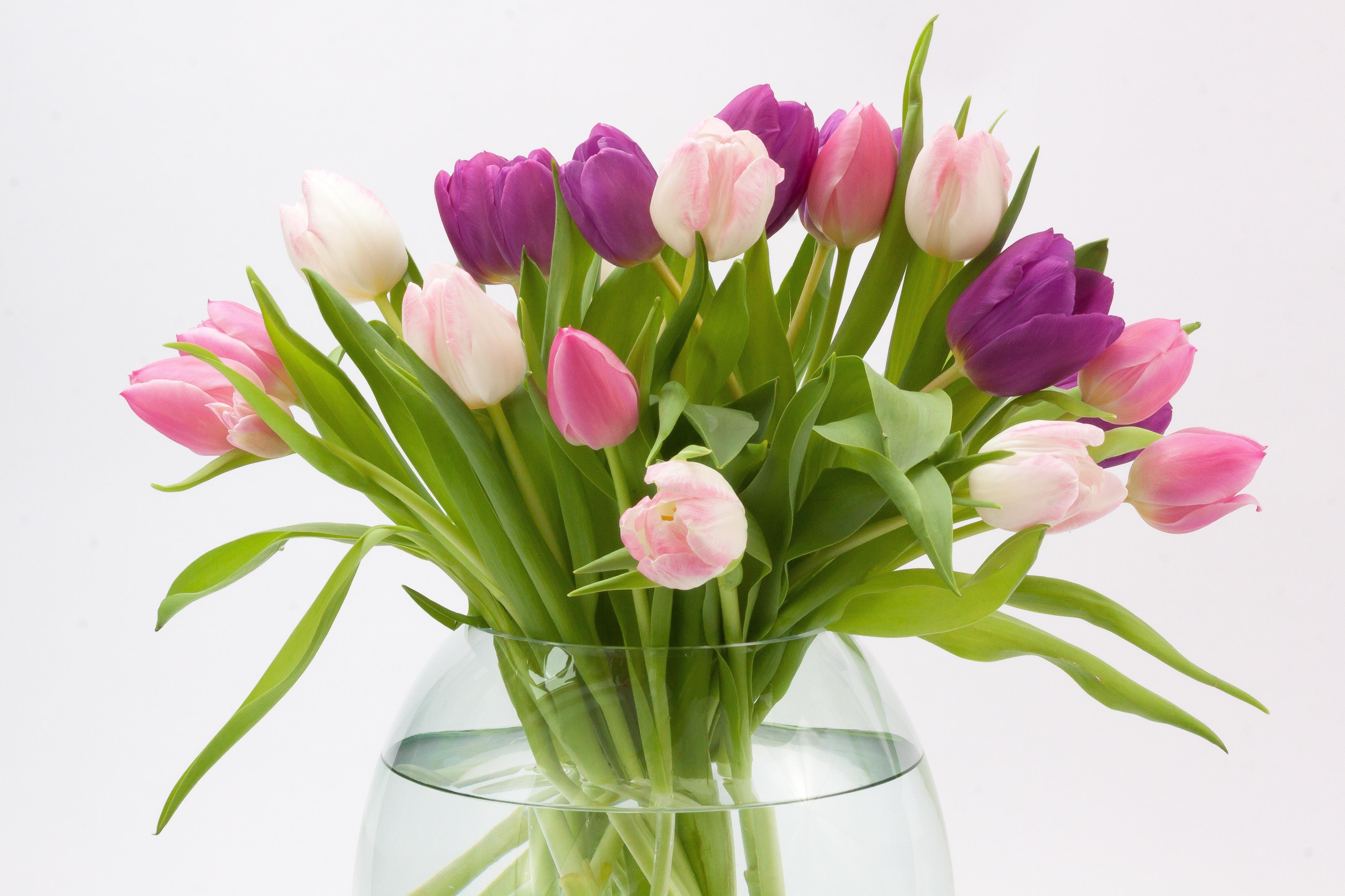 hot pink flower vases of free images blossom leaf petal bloom tulip green red pink pertaining to free images blossom leaf petal bloom tulip green red pink glass vase violet floristry spring flower flowering plant schnittblume flower