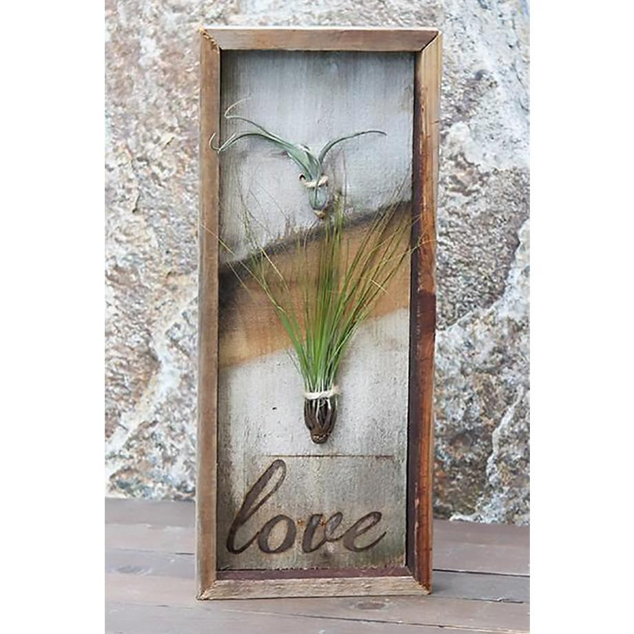 how to grow bulbs in vases of air plant on reclaimed wood tillandsia planter air plant with regard to tillandsia air plant duo vertical reclaimed wood plaque framed with love free shipping