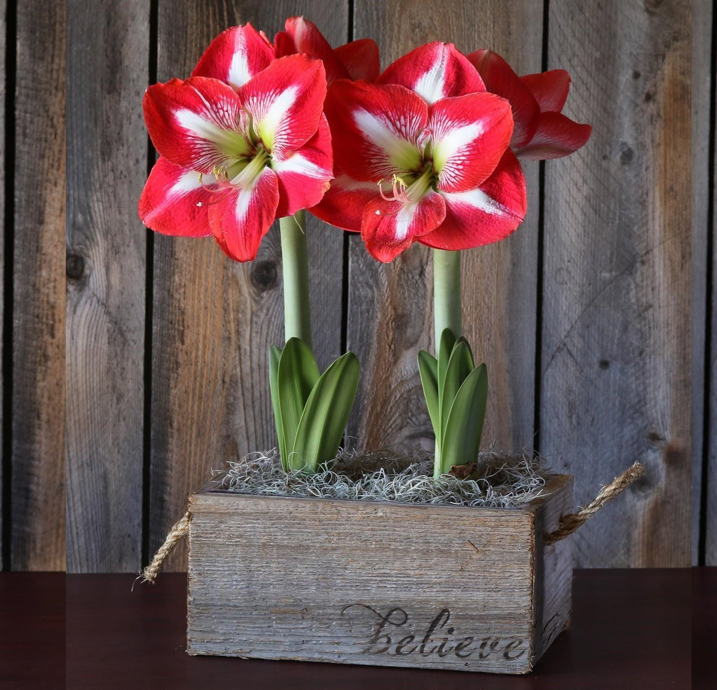 how to grow bulbs in vases of flowering gifts gifts for the gardener gardening gift cards with gifts