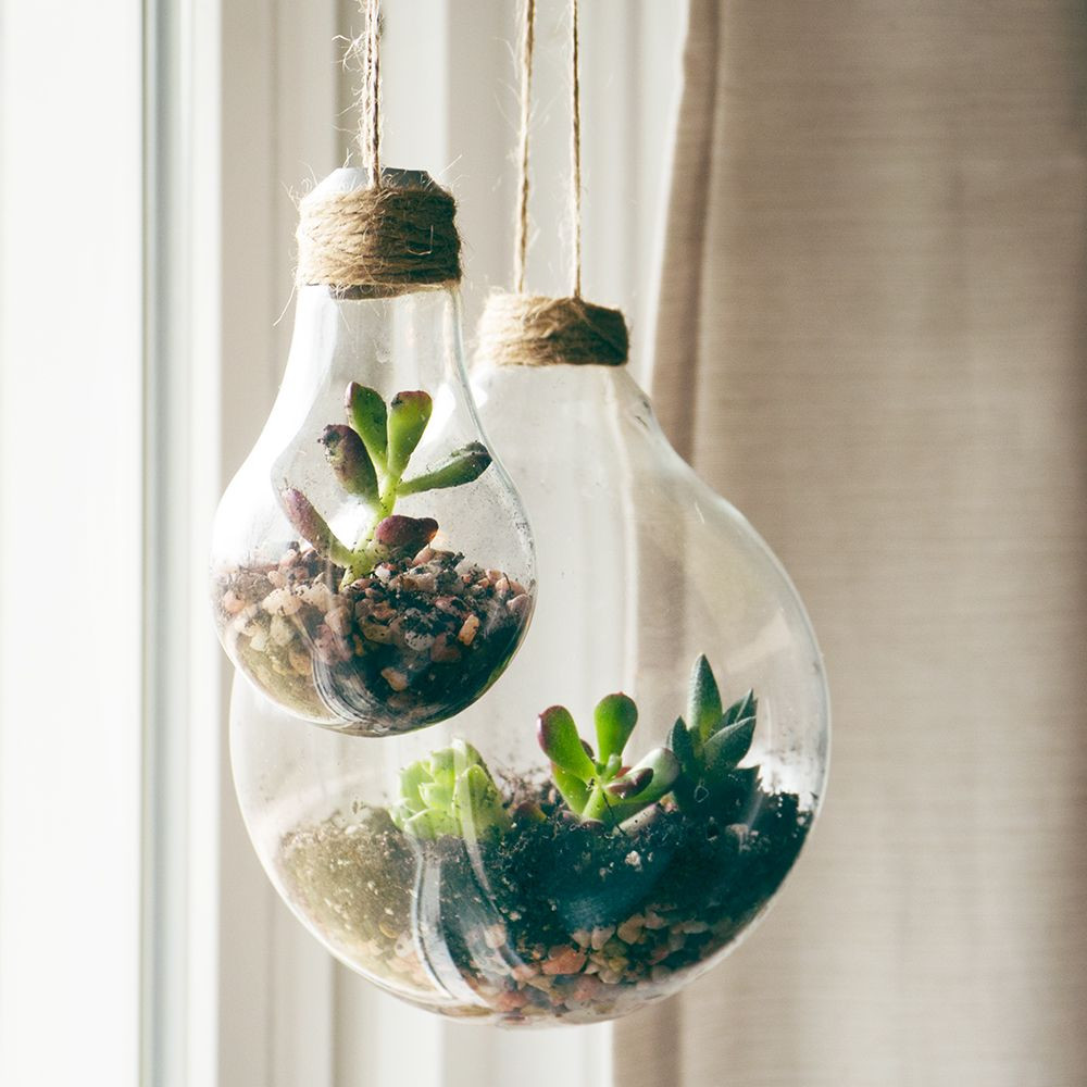 how to grow bulbs in vases of upcycled container ideas for succulents tiny gardens pinterest throughout dont toss out your light bulbs put them to use as a creative and cute container for your succulents