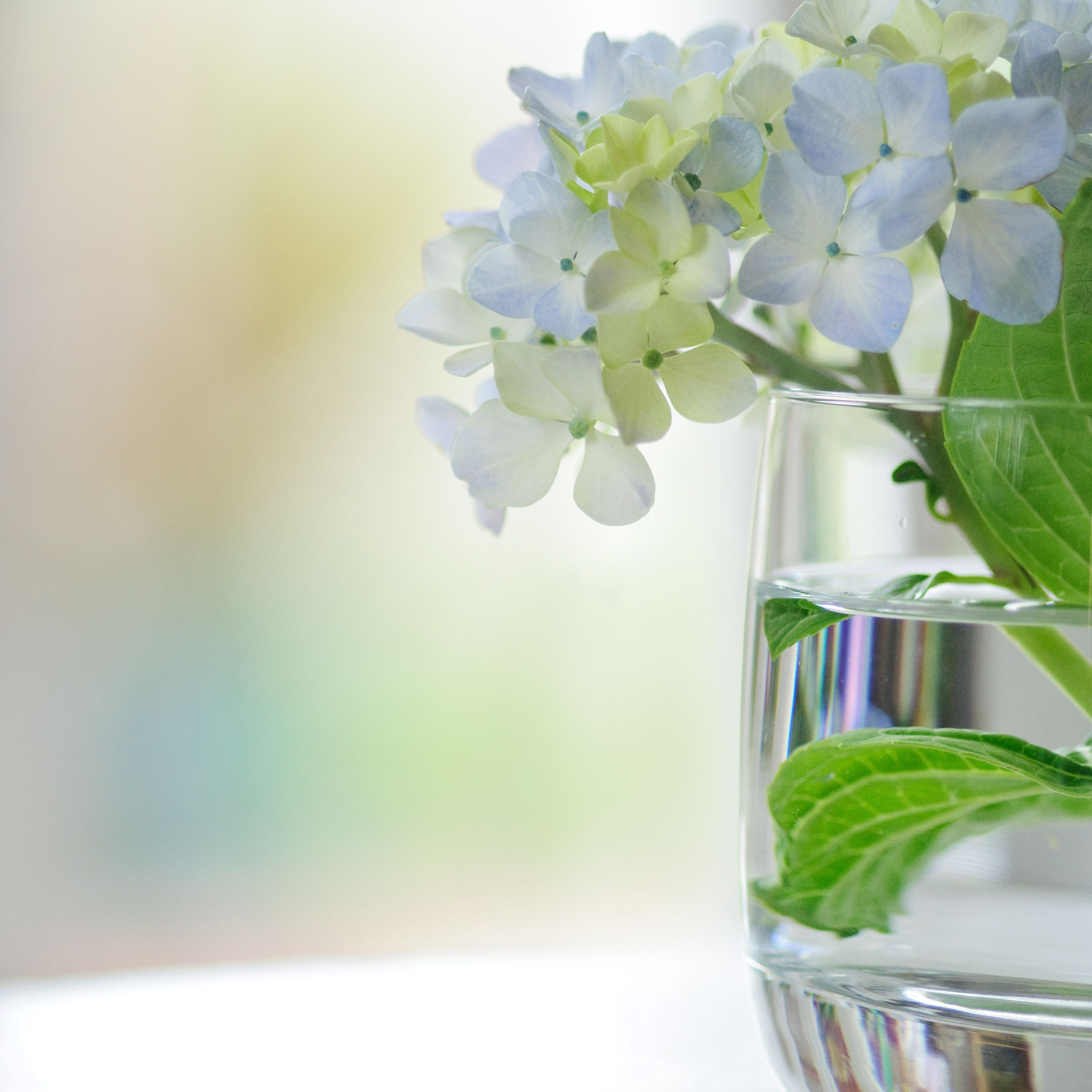 how to make floating flowers in vase of how to dry and preserve hydrangea flowers regarding hydrangeas vase gettyimages 103956334 589b63945f9b58819c837e07
