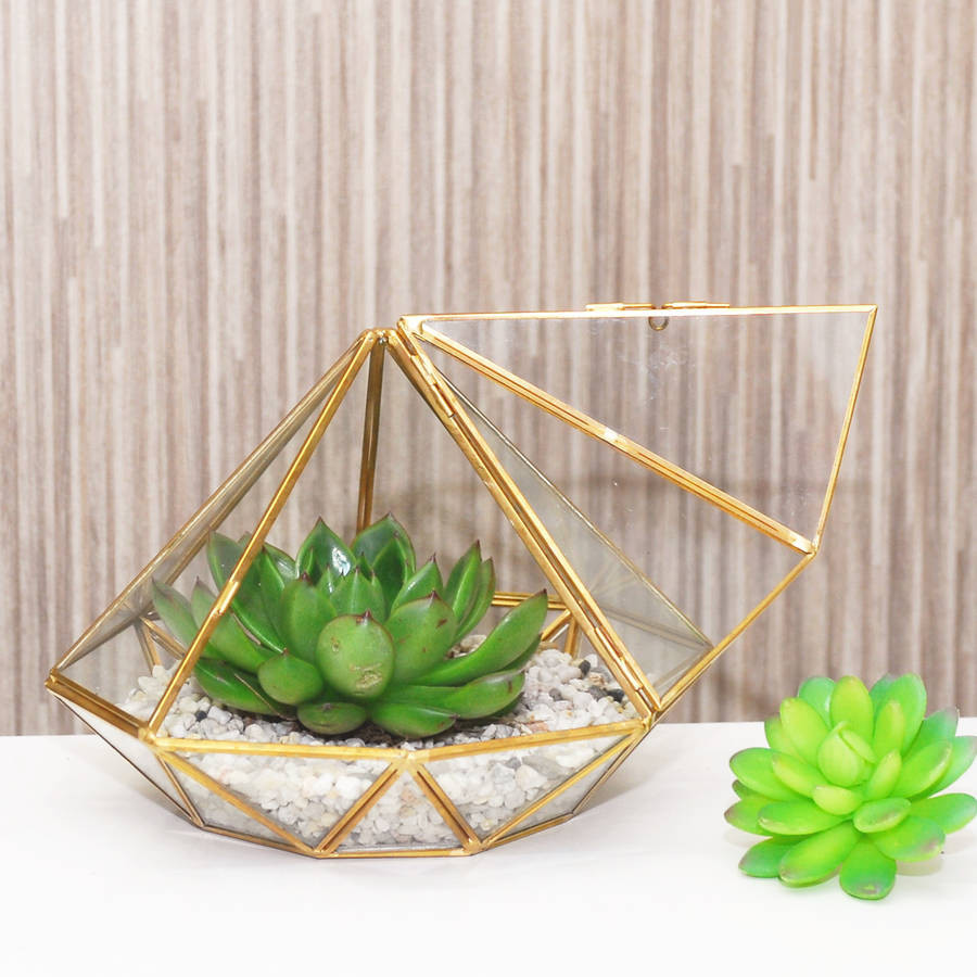 large glass cube vase of large diamond glass succulent terrarium by dingading terrariums within large diamond glass succulent terrarium by dingading terrariums notonthehighstreet com