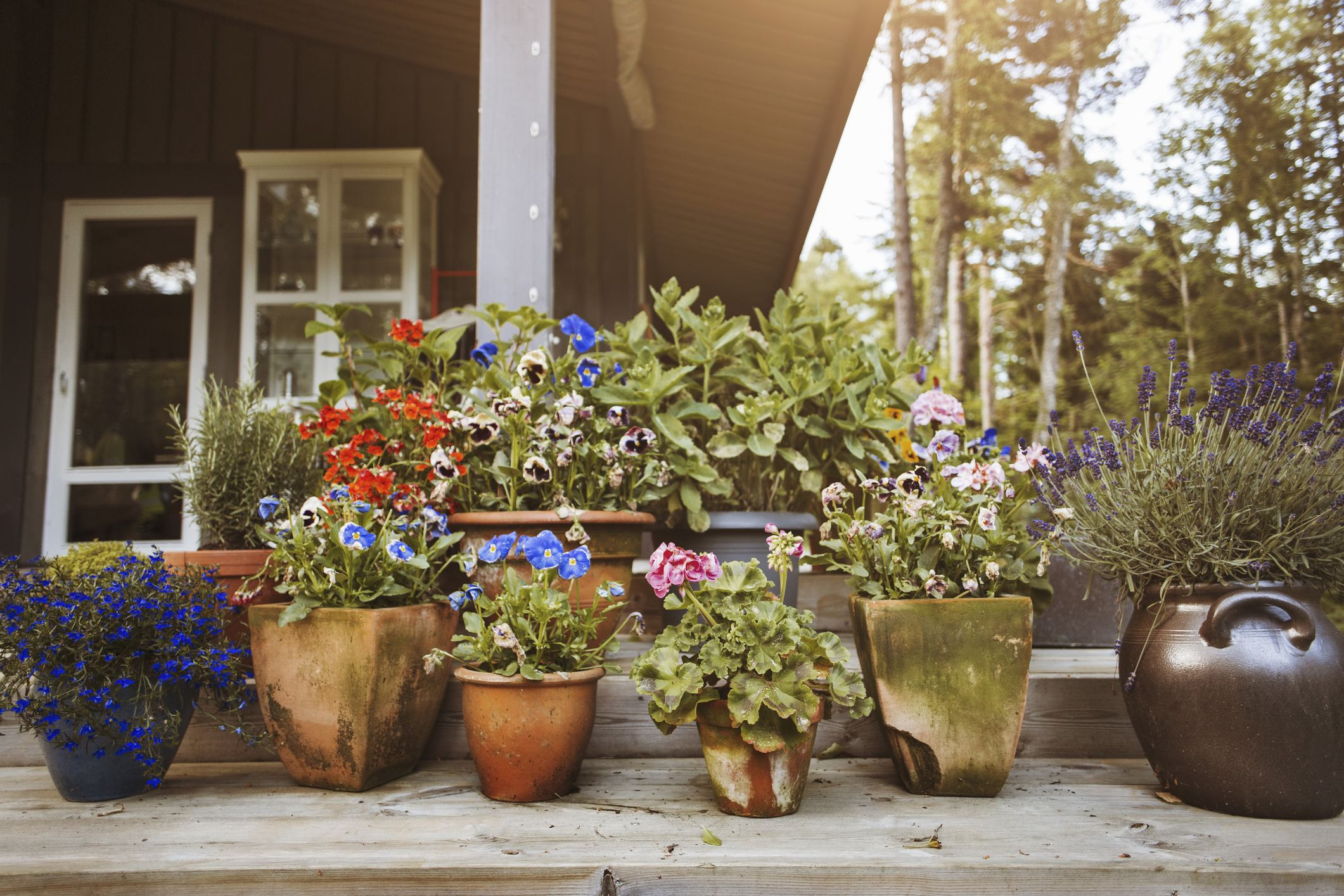 large outdoor pottery vases of the elements of successful container gardening intended for gettyimages 598308605 590a3c4a5f9b58647041a6a0