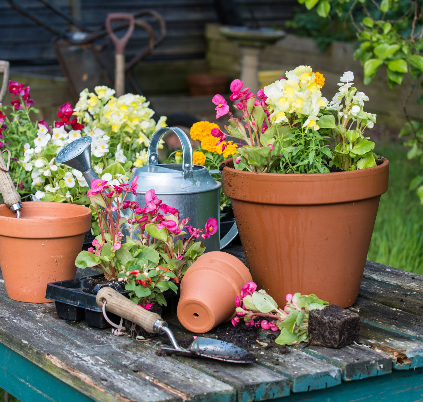 large outdoor vases wholesale of how to avoid drowning the plants in your container garden in pottedflowers gettyimages 171589906 59af7360aad52b001053063d
