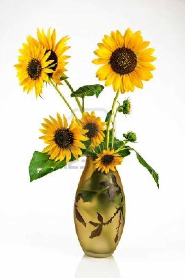 large sunflower vase of 13 best beauty images on pinterest awesome background images and face within bouquet of sunflower in a vase