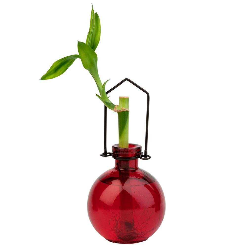 large teardrop glass vase of amazon com couronne company m370 6544g01 hanging ball recycled regarding amazon com couronne company m370 6544g01 hanging ball recycled glass rooting vase 7 lime 1 piece home kitchen