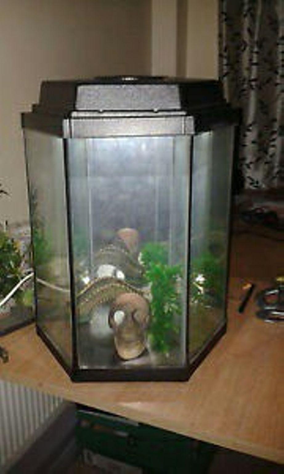 lenox fascination lead crystal vase of https en shpock com i we14ua kxyuvi0wx 2016 12 15t193217 inside start up fish tank 191cfb9c