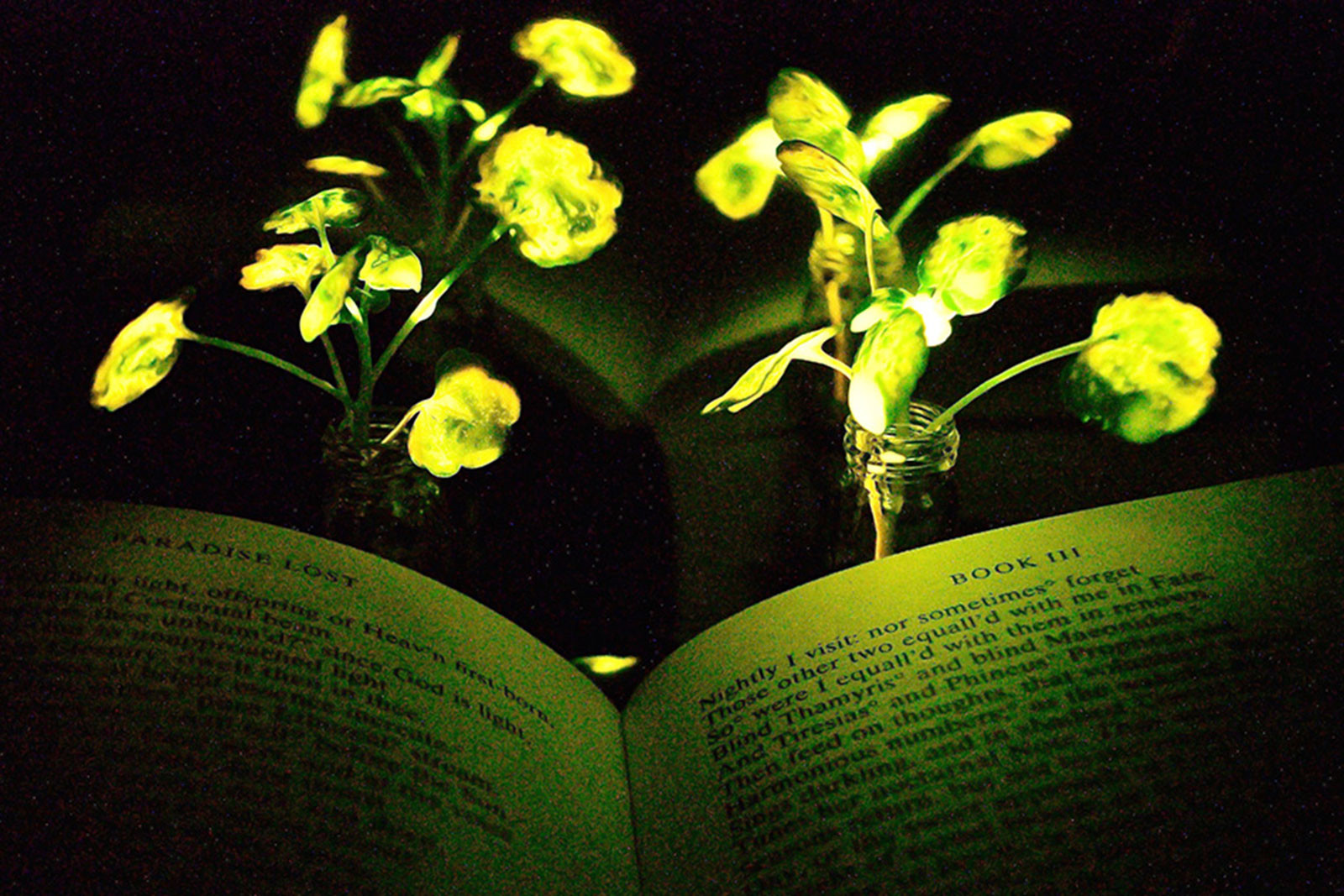 light bulb vase michaels of could glowing plants replace light bulbs cnn style in 180104134611 mit glowing plants
