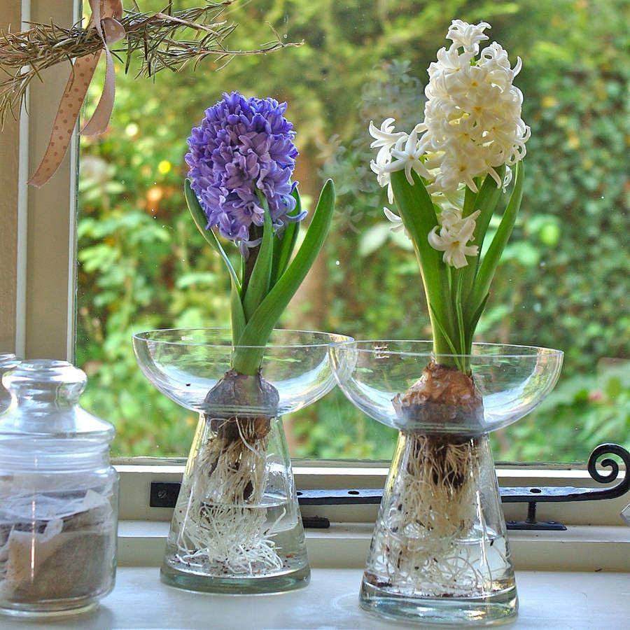 light bulb vase of hyacinth bulb vase by ella james notonthehighstreet com house of inside hyacinth bulb vase by ella james notonthehighstreet com