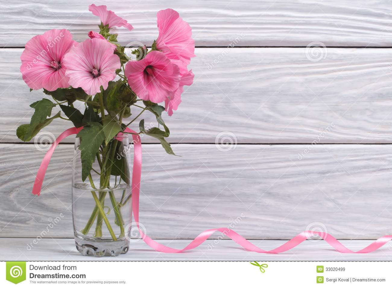light pink glass vase of lavatera pink flowers in a glass vase stock image image of bunch throughout lavatera pink flowers in a glass vase