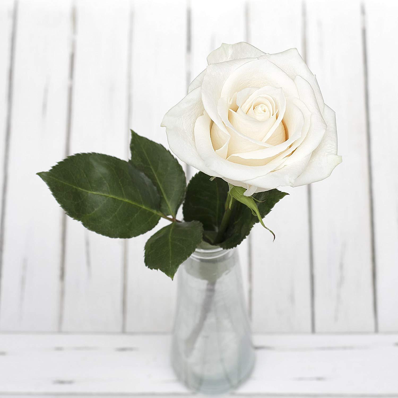 long stem flowers in vase of amazon com greenchoice flowers 24 fresh cut white roses 27 5 regarding amazon com greenchoice flowers 24 fresh cut white roses 27 5 super long stems no vase garden outdoor