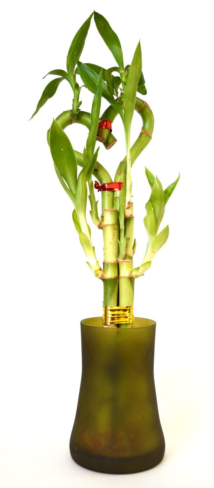 lucky bamboo elephant vase of 414 best products images on pinterest bamboo lucky bamboo and pertaining to 9greenbox lucky bamboo heart style with tall glass vase
