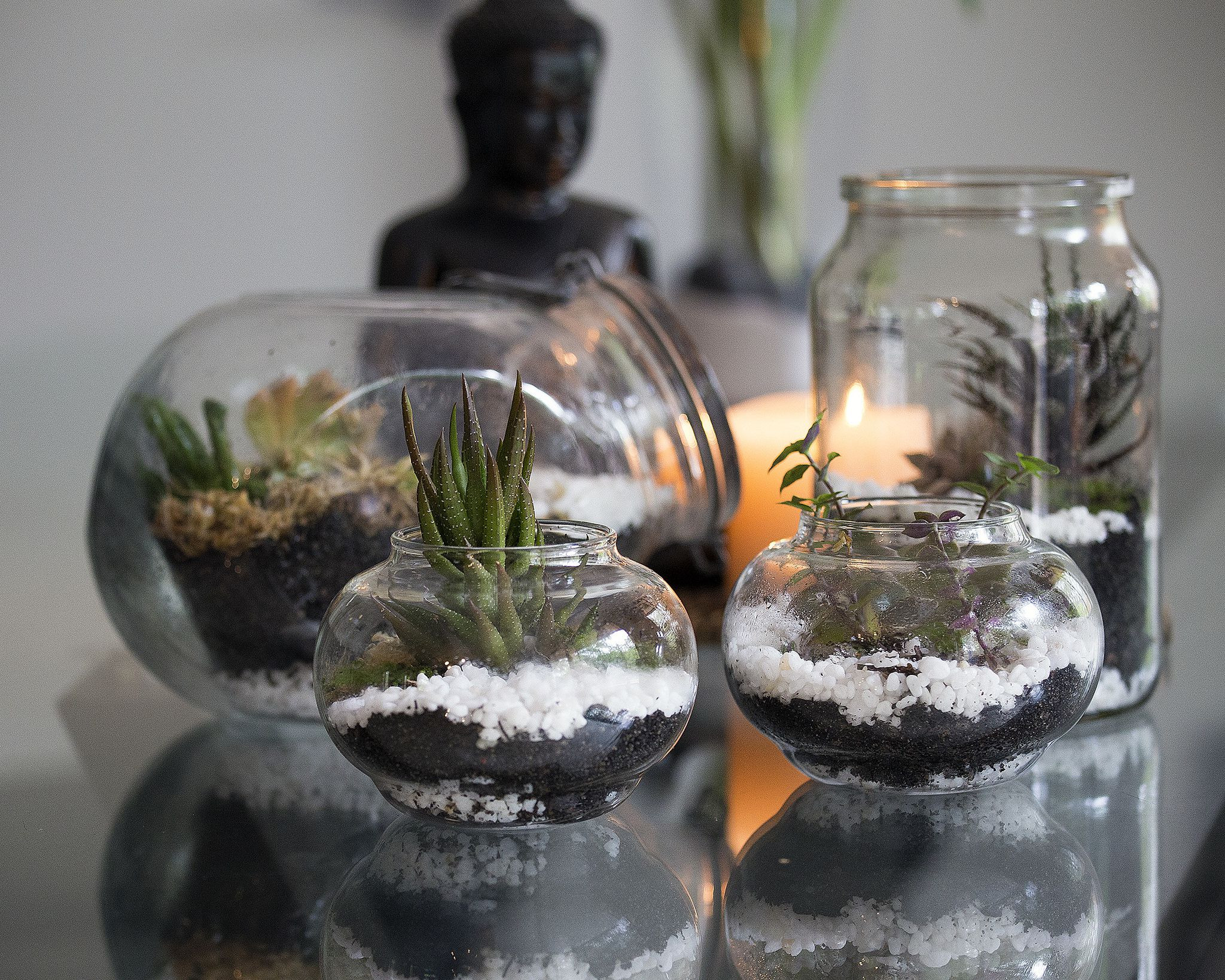 lucky bamboo plant with glass vase of common terrarium mistakes and how to avoid them inside terrarium 22867406835 68063d4d0a k 58e699025f9b58ef7ee5c35d