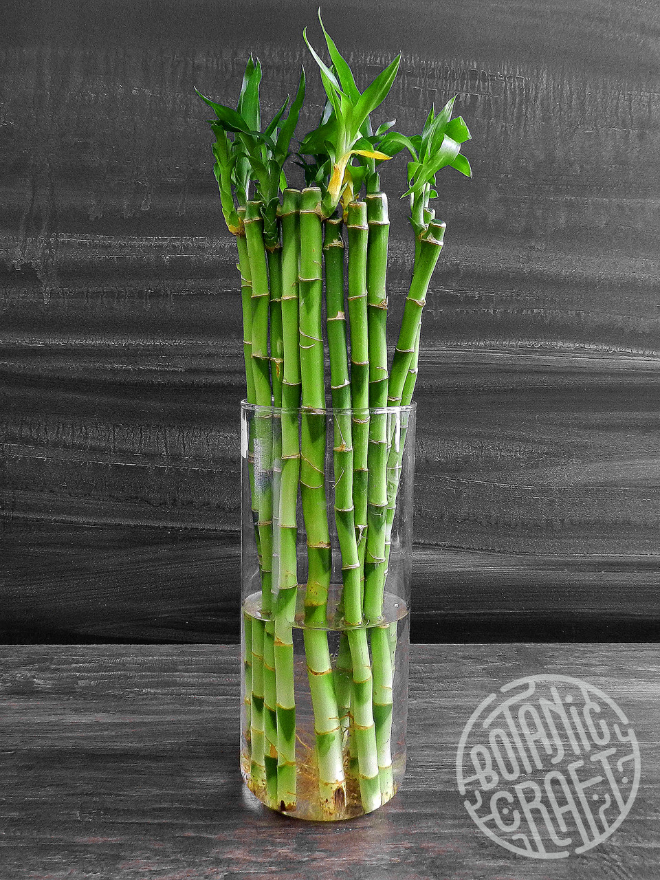 "lucky bamboo vase of d""n€dn†dµd½d ndd½ddµn€d lucky bamboo 1 nn'dµd±dµdnŒ botanic craft with regard to dŸd¾dodd·dn'nŒ d²ndµ n""d¾n'd¾d³n€dn""d¸d¸"