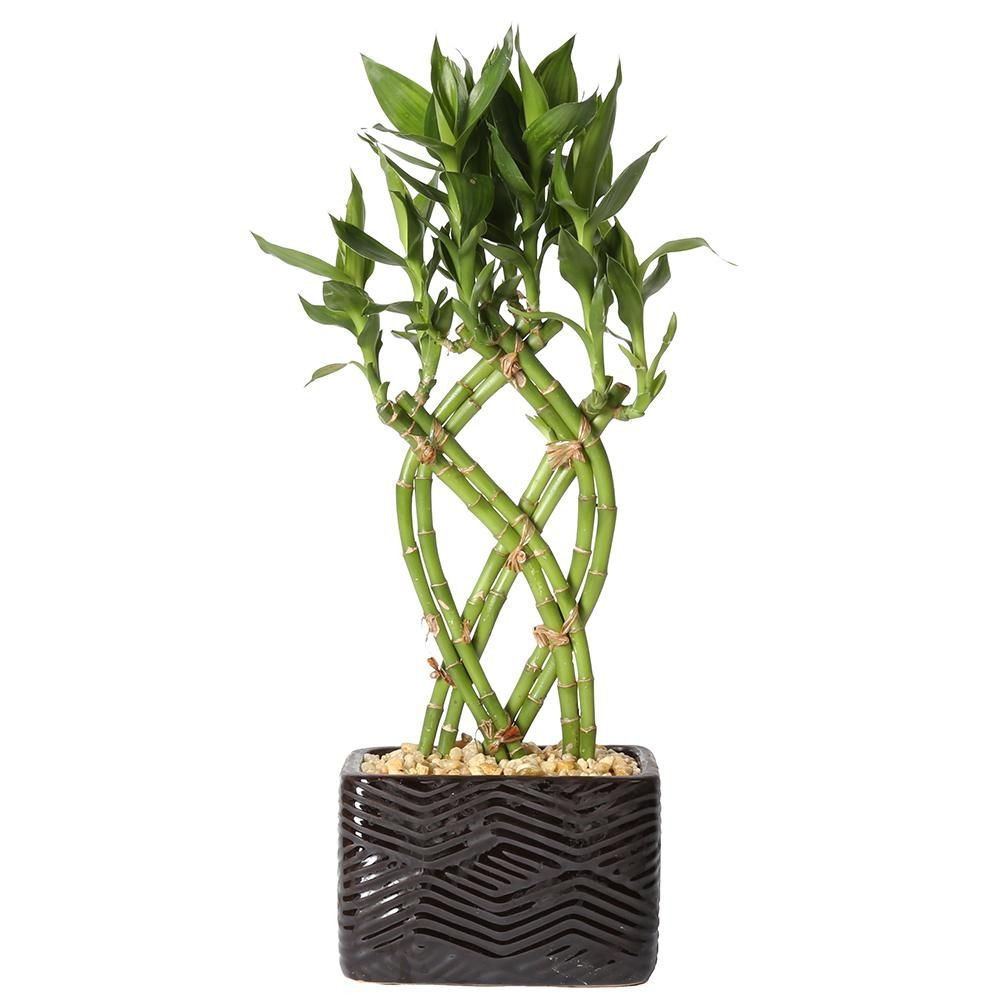 lucky bamboo vase of large black and natural seagrass calista tote basket by wo in lucky bamboo weave braid in 5 5 in galileo black square ceramic