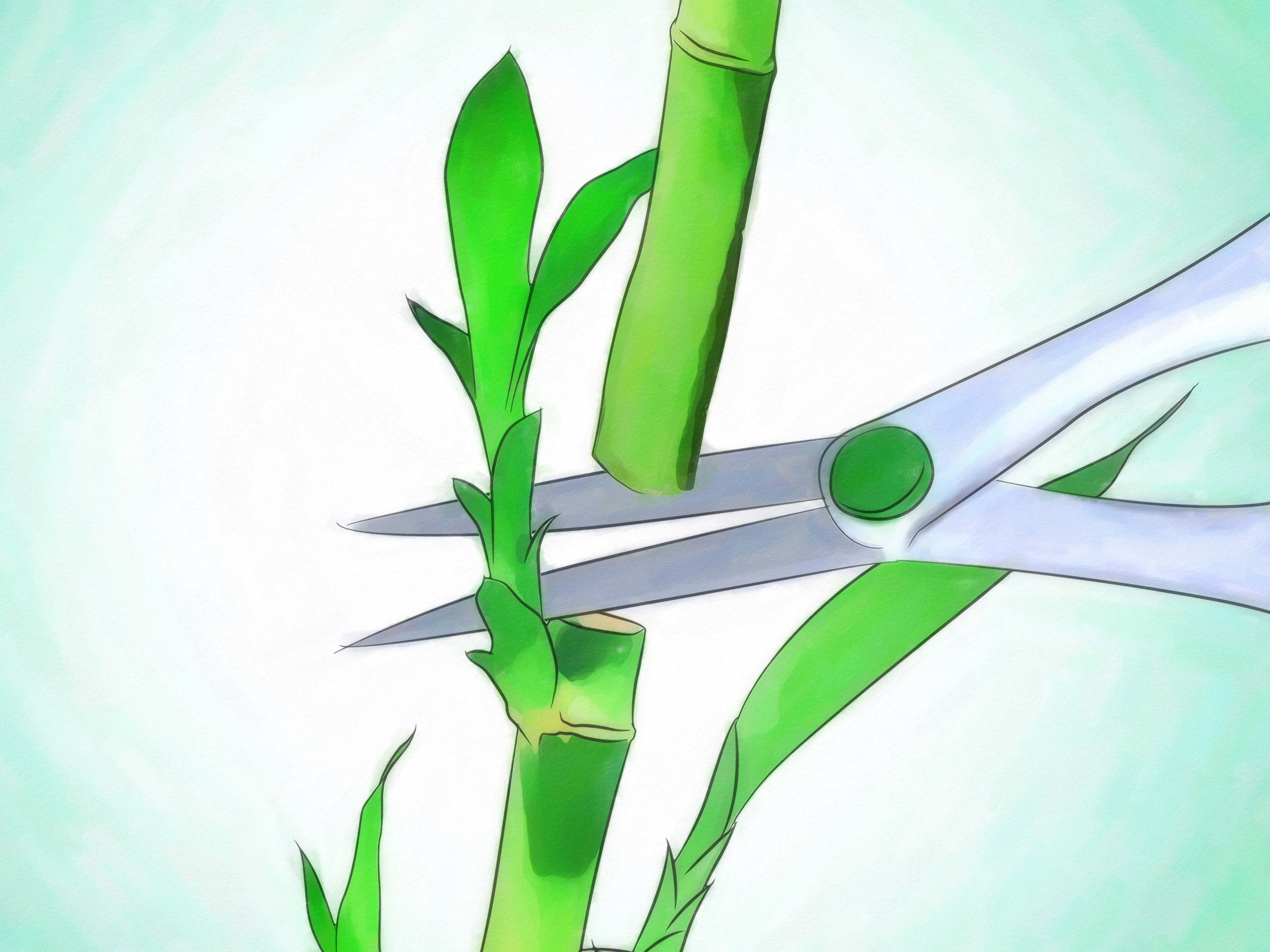 lucky bamboo vases pots of 3 ways to grow lucky bamboo wikihow in grow lucky bamboo step 12