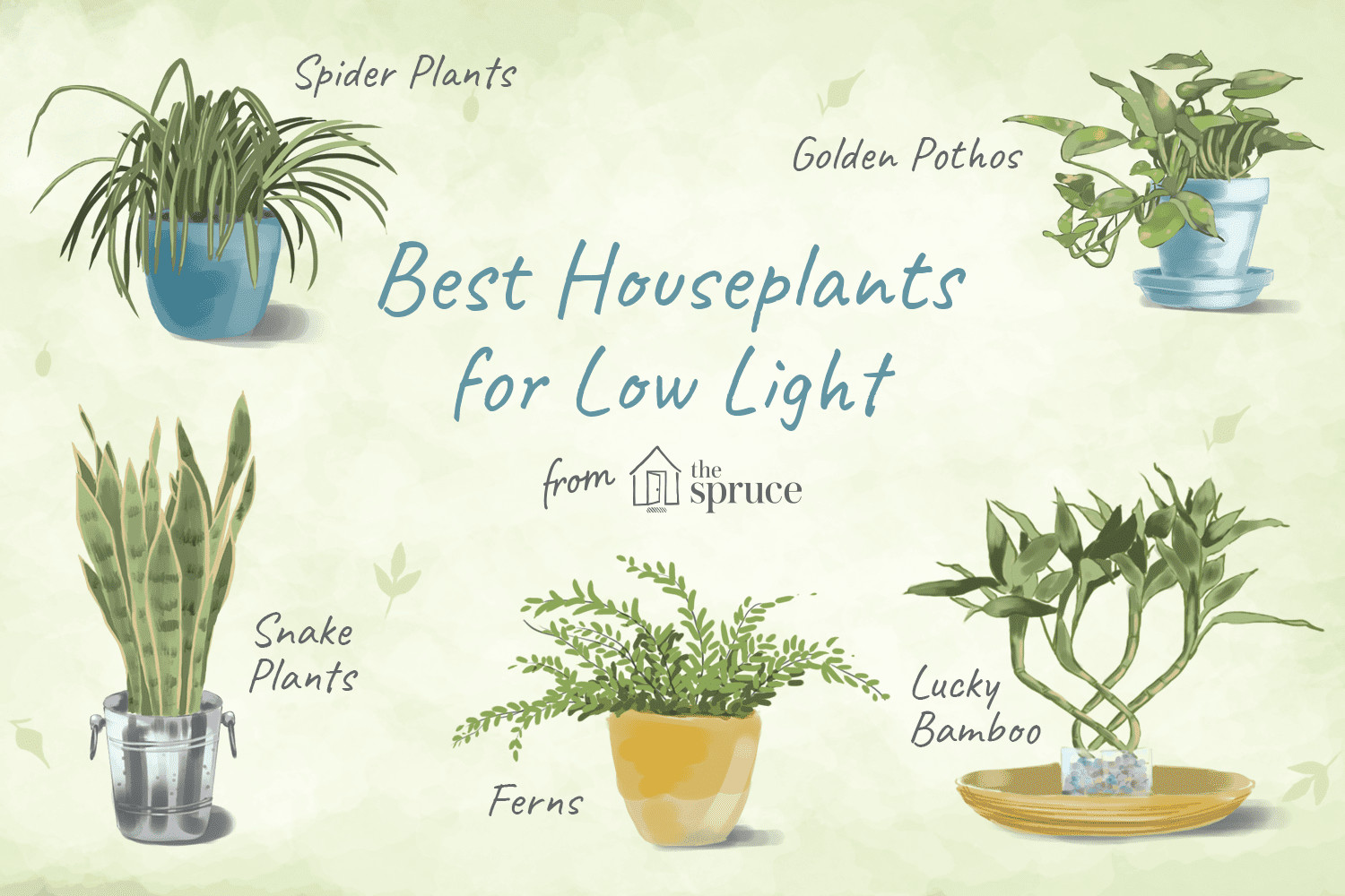 lucky bamboo vases pots of 7 houseplants for low light conditions with low light conditions houseplants 1902917 final 5b218f0deb97de0036d2be2f