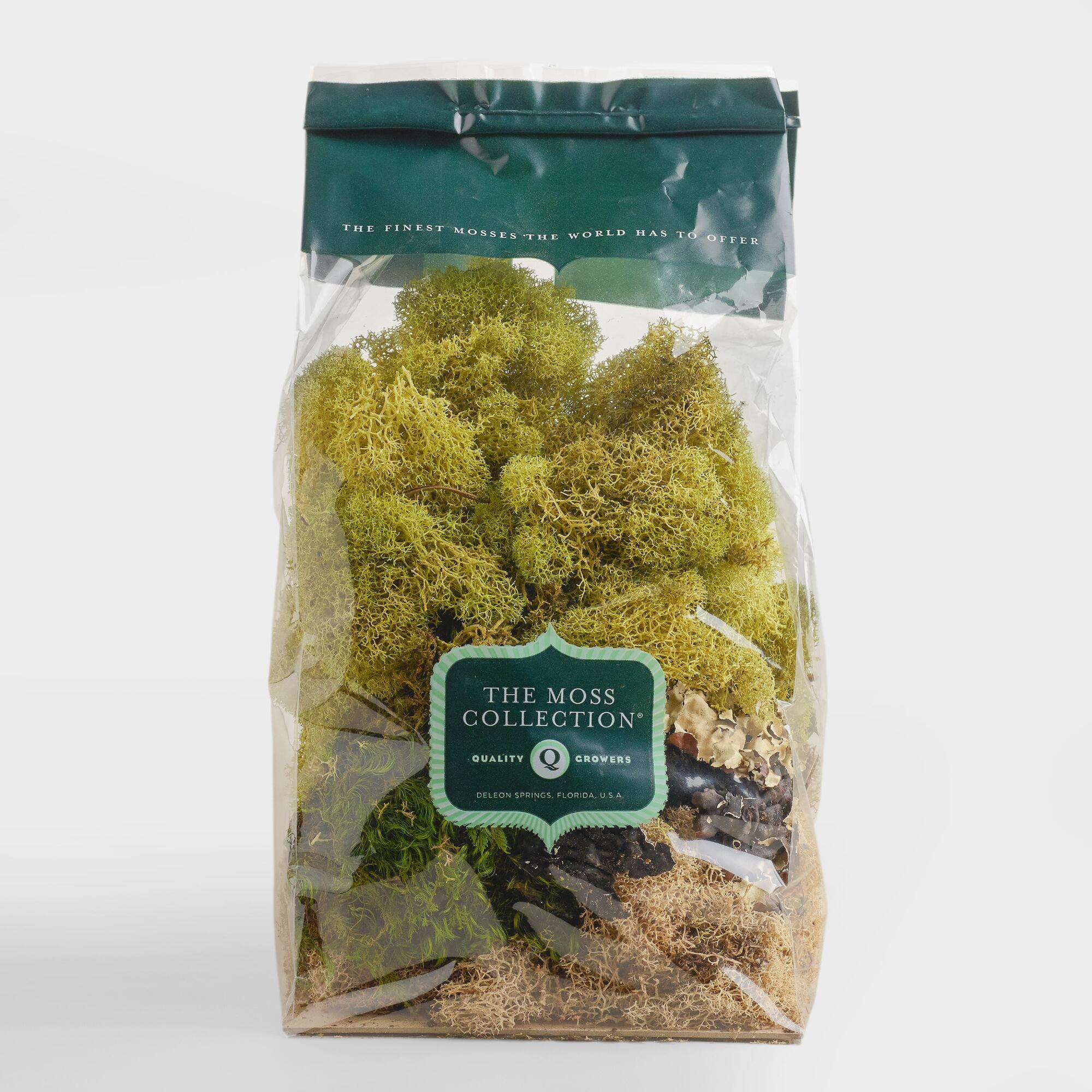 moss ball vase filler of moss vase filler green by world market products pinterest throughout moss vase filler green by world market