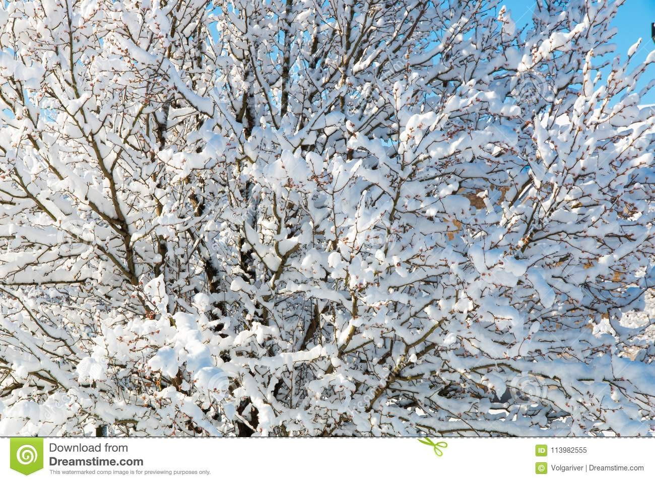 Natural Branches for Vases Of 15 Unique Banch Tree Banches Branches Image Lehahu Wallpaper Throughout Banch Tree Banches Branches Image Best Of Pattern Tree Branches Covered with Snow Natural Background Of