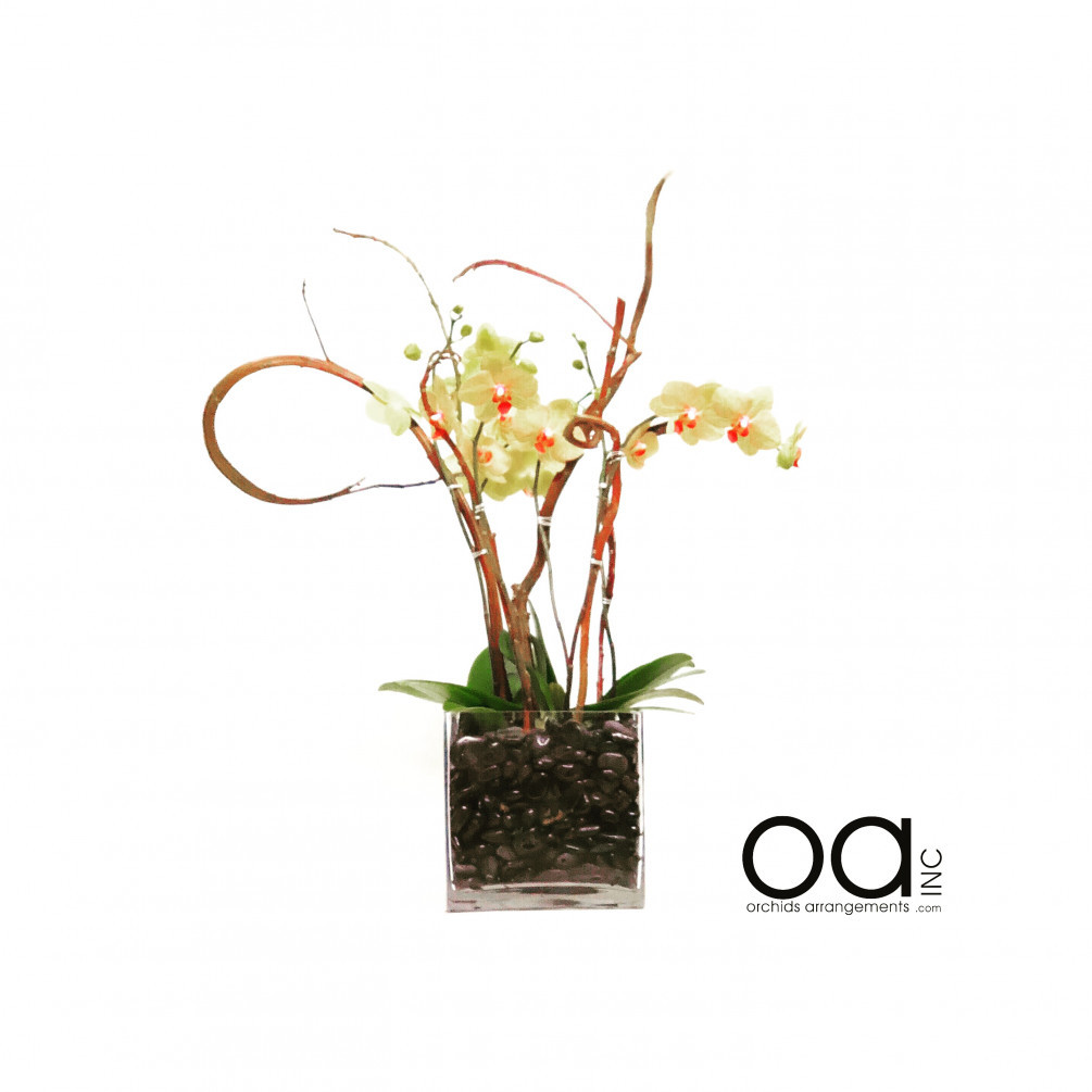 orchid arrangements in glass vases of send 4 orchids arrangement square glass cube regarding 20180602025418 file 5b12af9ab22a9