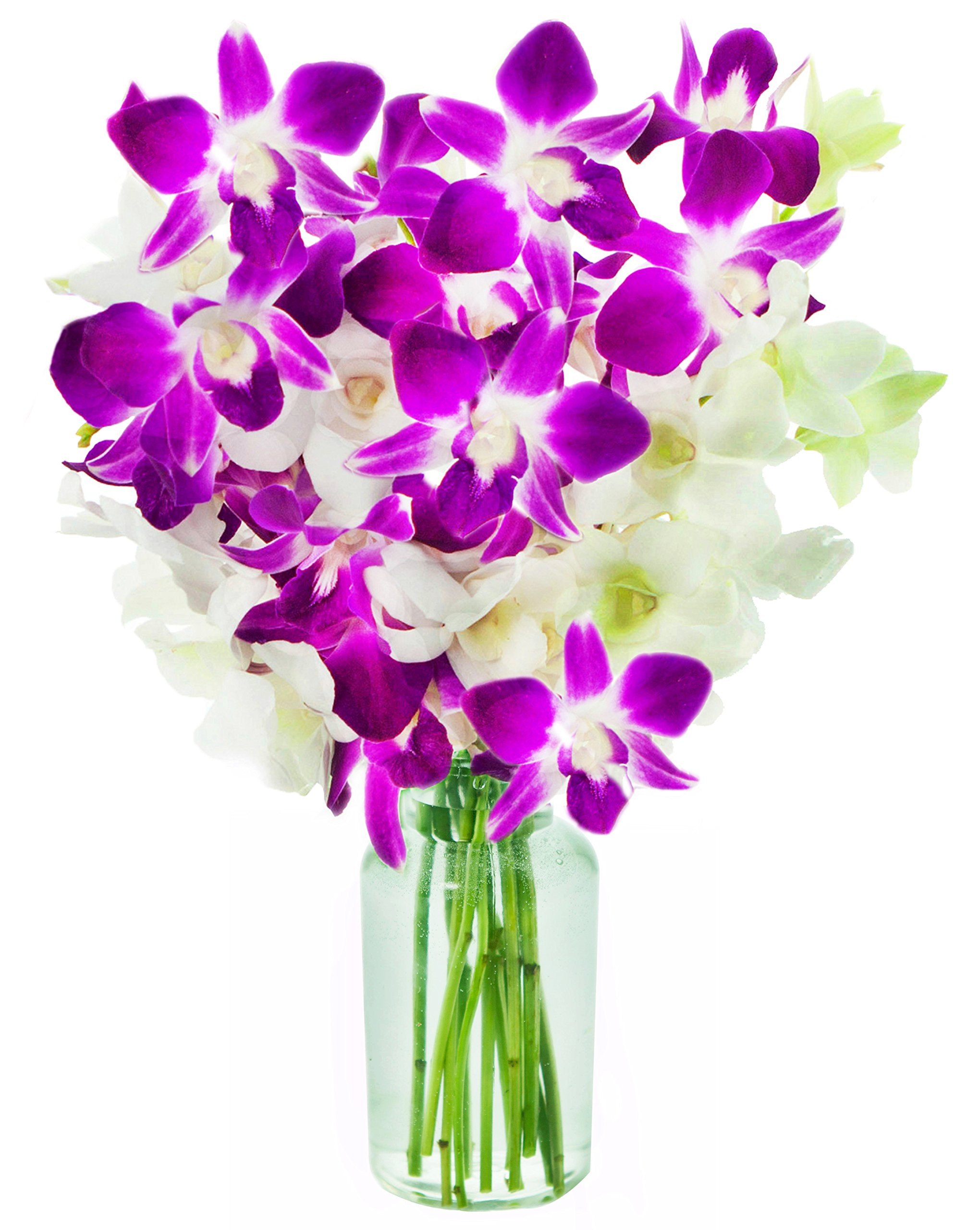 orchid flower arrangement vase of cheap opal orchid find opal orchid deals on line at alibaba com throughout get quotations a· kabloom exotic opal orchid bouquet of 5 white dendrobium orchids 5 purple dendrobium orchids from