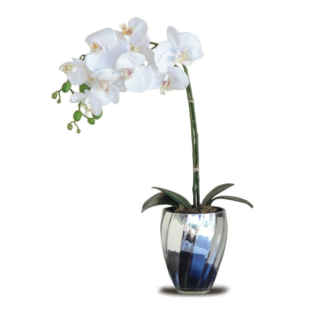 orchid in glass vase of arranjo de orquidea 45x15 cm orchids pinterest orchid flowers with regard to arranjo de orquidea 45x15 cm