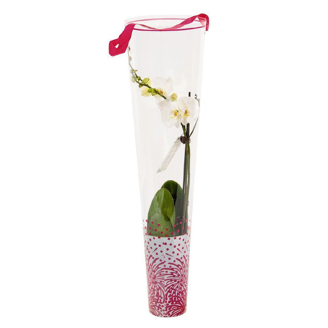 22 Stylish orchid In Glass Vase