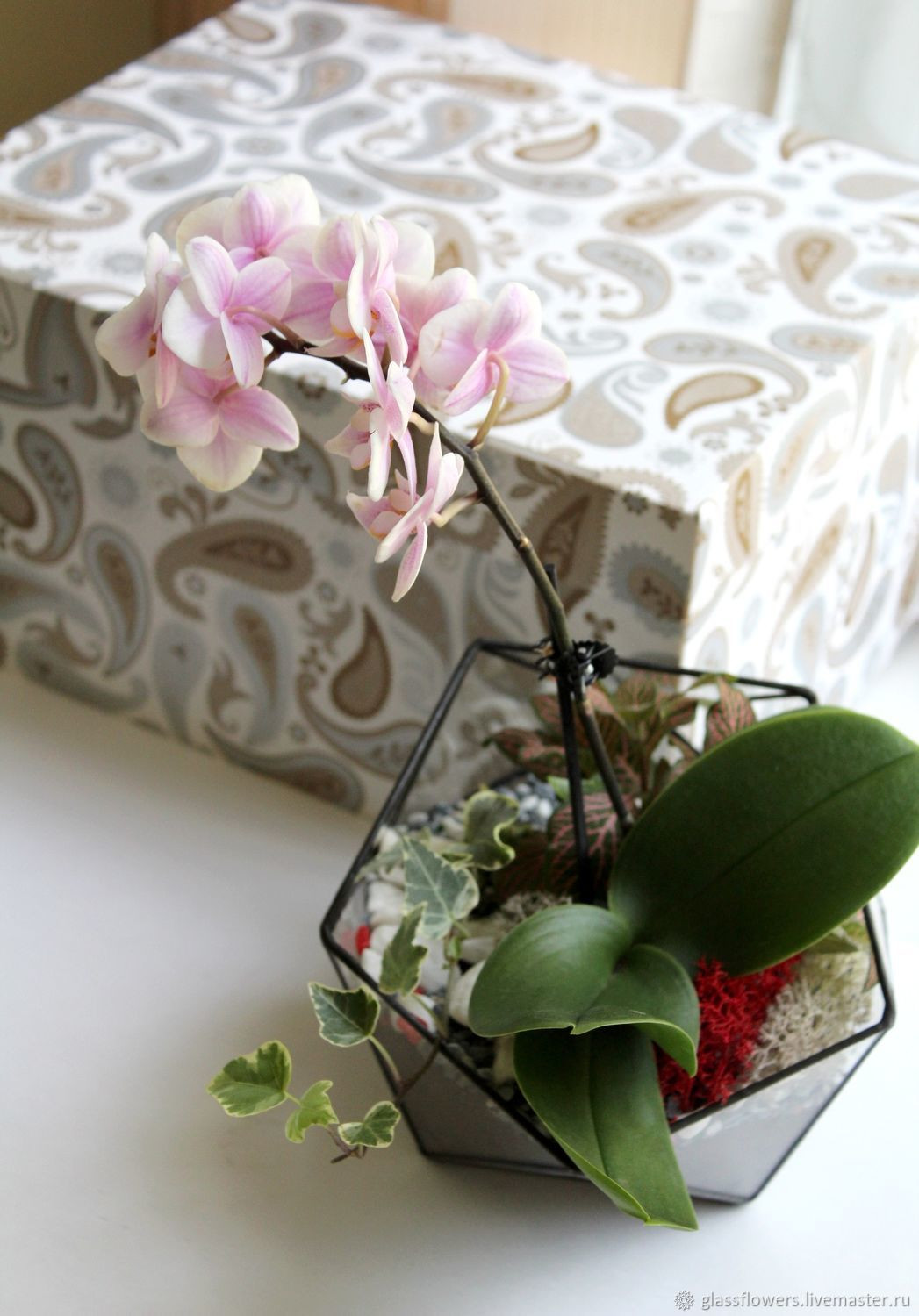 orchid vase of the floriana icosahedron with orchid orchidarium shop online on for the floriana icosahedron with orchid orchidarium glass flowers my