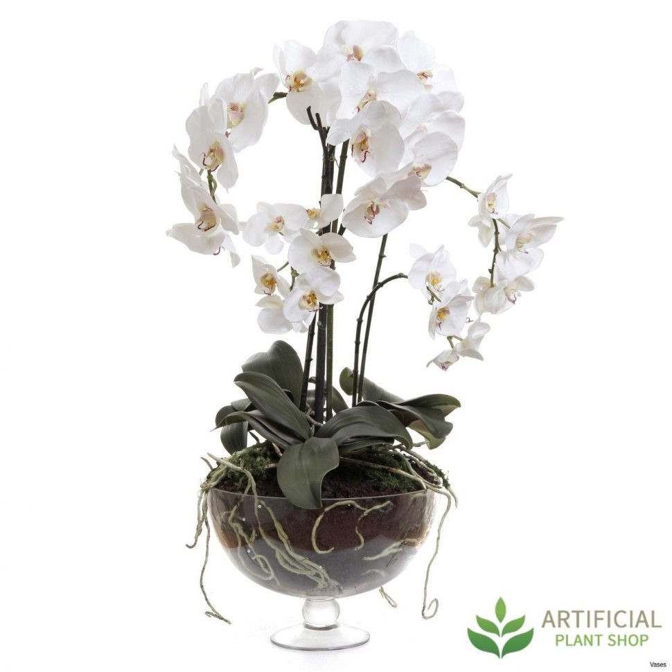 Orchid with Vase Of Best Silk Flowers San Diego Image Collection In Artificial Bloom White Artificial Flowers Excellent Zoom Vases orchids In A Vase Dendrobium orchid San Diego Diegoi 0d