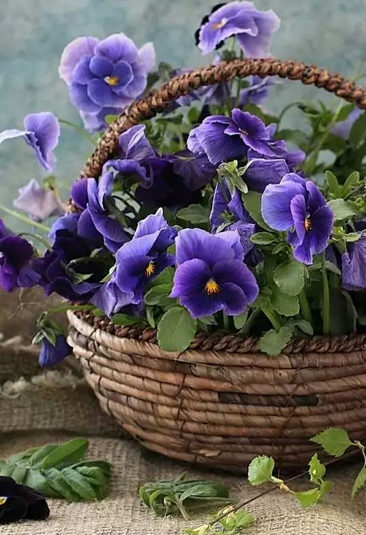 pansy flower ring vase of best 100 pansy images on pinterest pansies violets and ornaments with purple pansies