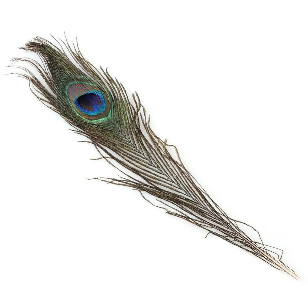 17 Recommended Peacock Feathers In Vase Ideas