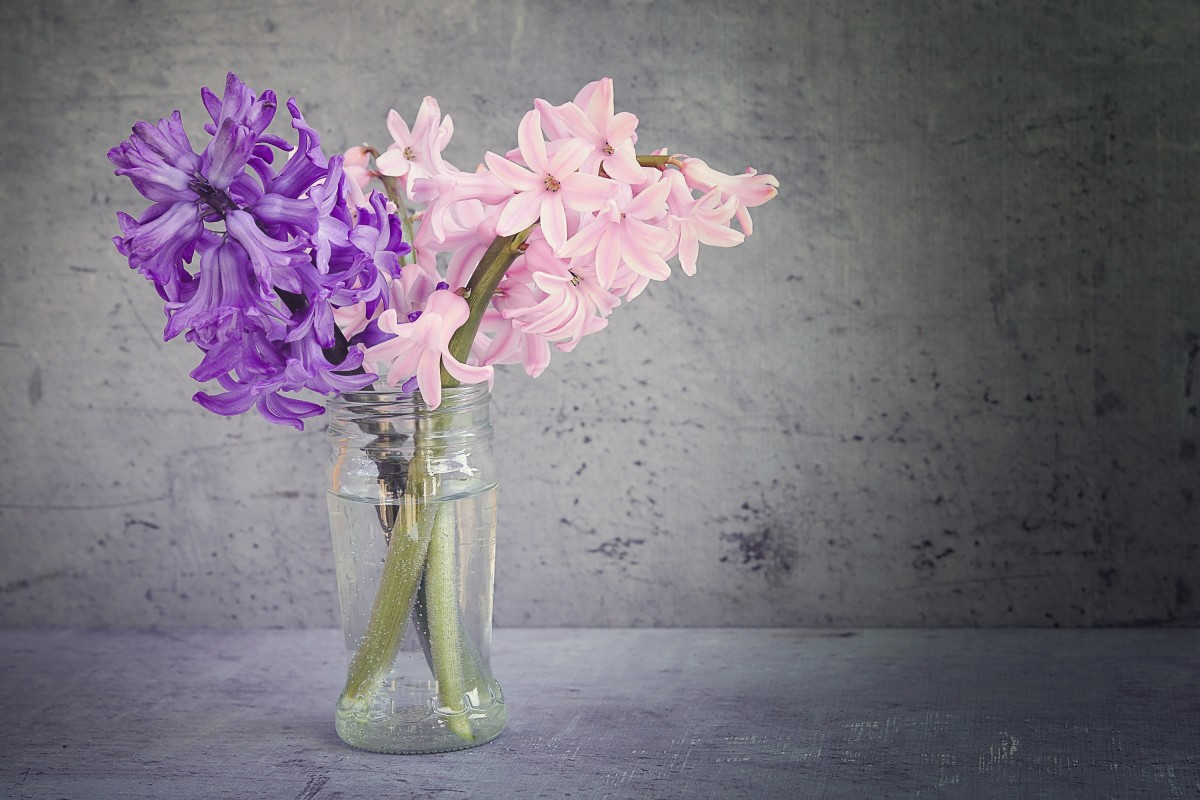 25 Stylish Pictures Of Lilacs In A Vase 2021 free download pictures of lilacs in a vase of free images blossom sunlight purple petal pink close flora with regard to blossom plant white flower purple glass