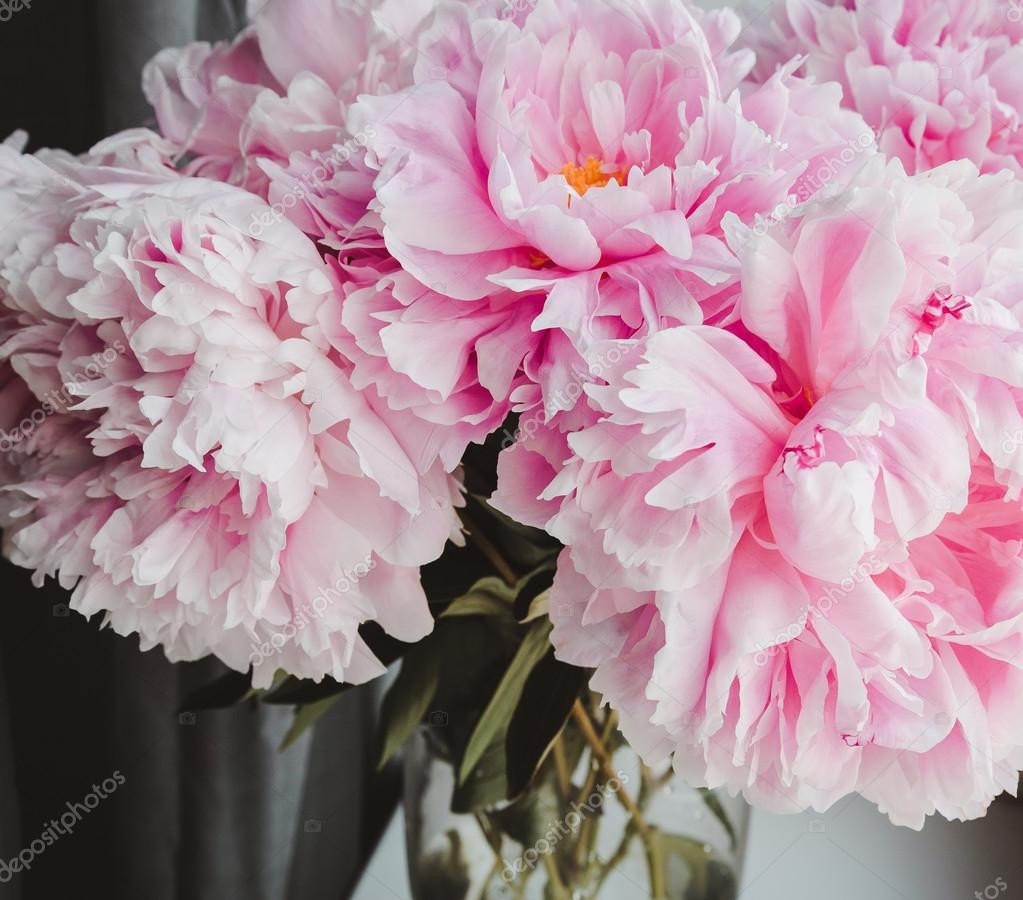 pink peonies in glass vase of beauty bunch of pink peonies peony flowers in vase background with beauty bunch of pink peonies peony flowers in vase background spring or summer lovely bouquet
