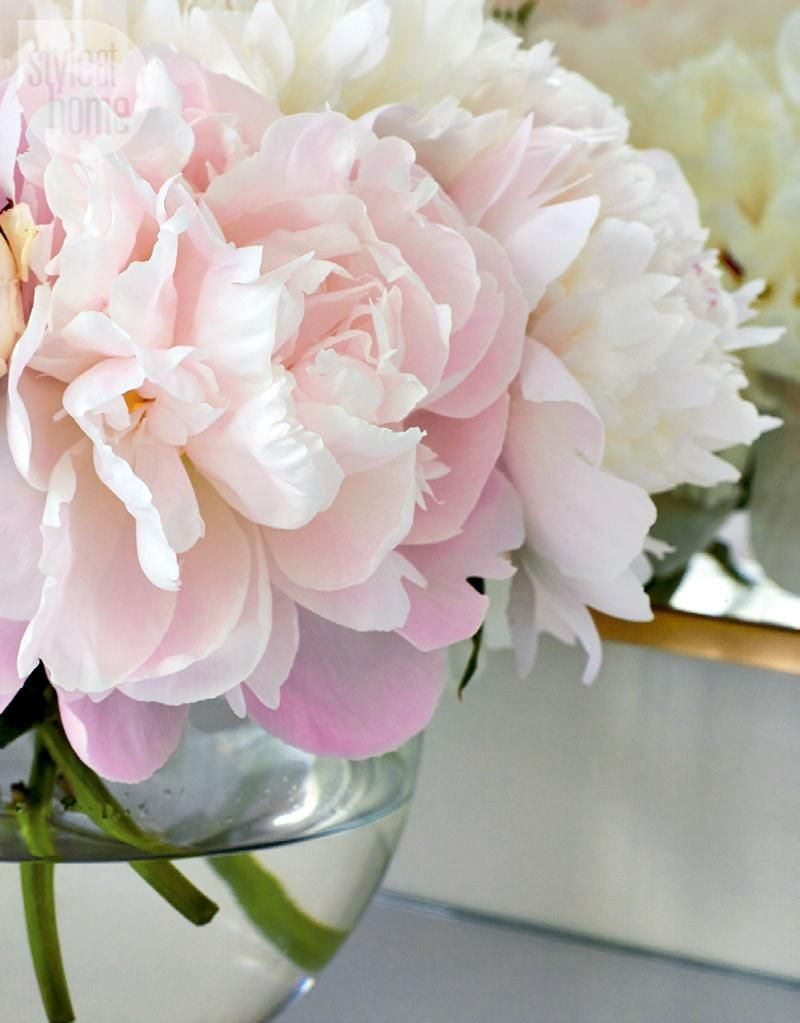 10 Wonderful Pink Peonies In Glass Vase 2021 free download pink peonies in glass vase of bedroom floral arrangement virginia and floral with regard to bedroom style at home pink peoniespink