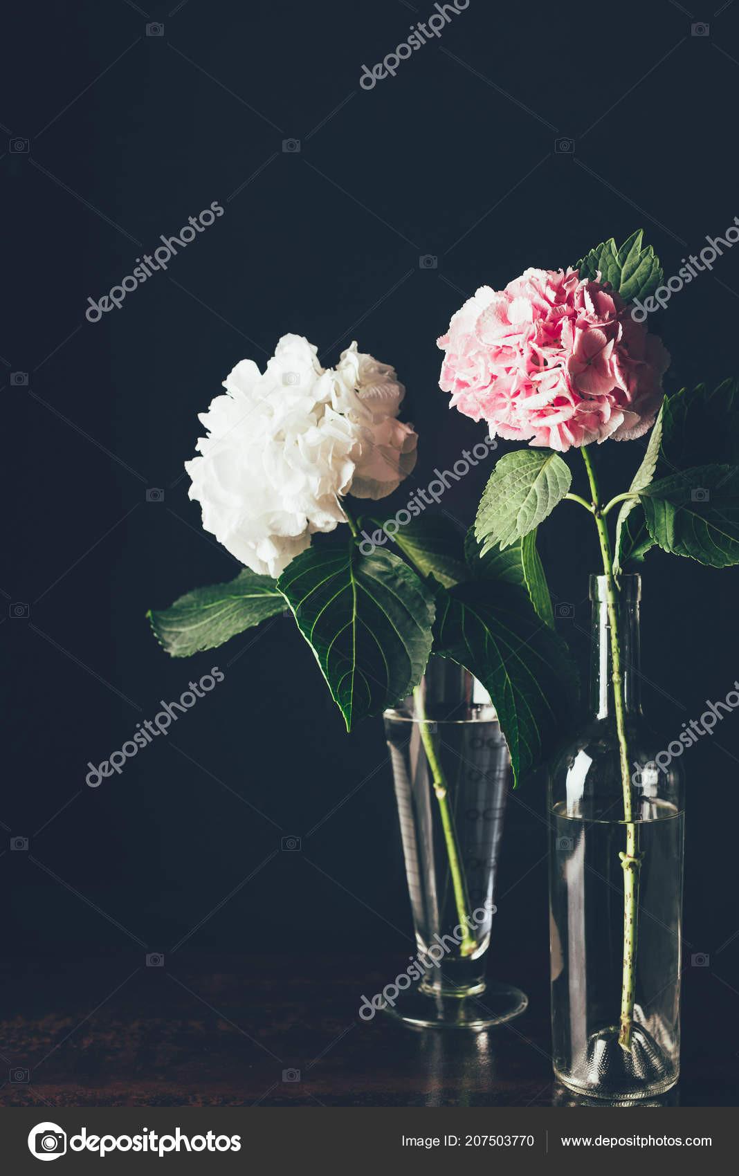 pink roses in glass vase of pink white hortensia flowers glass vases black stock fotografie throughout pink and white hortensia flowers in glass vases on black fotografie od katenovikova