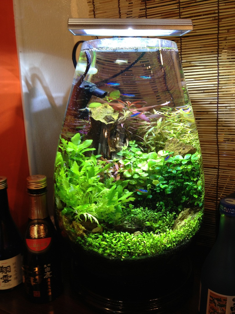 Plant In Vase with Betta Fish Of Home Intended for 584760edb3f02db741442160d40a7fd6