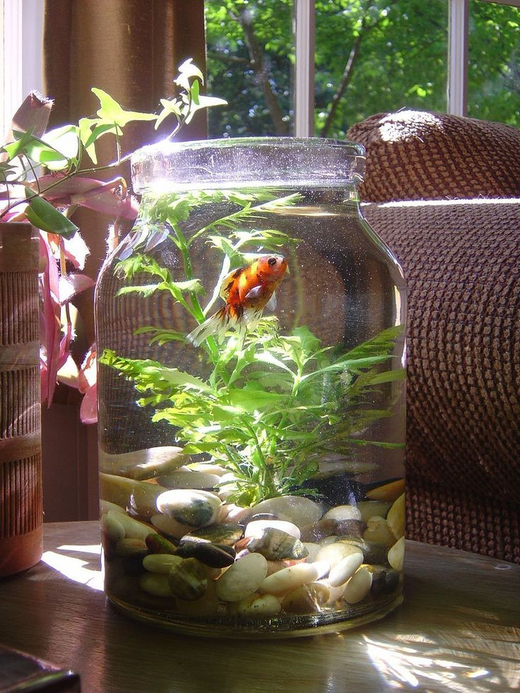 plant vase fish tank of gorgeous 30 awesome fish tank ideas https gardenmagz com 30 with regard to gorgeous 30 awesome fish tank ideas https gardenmagz com 30