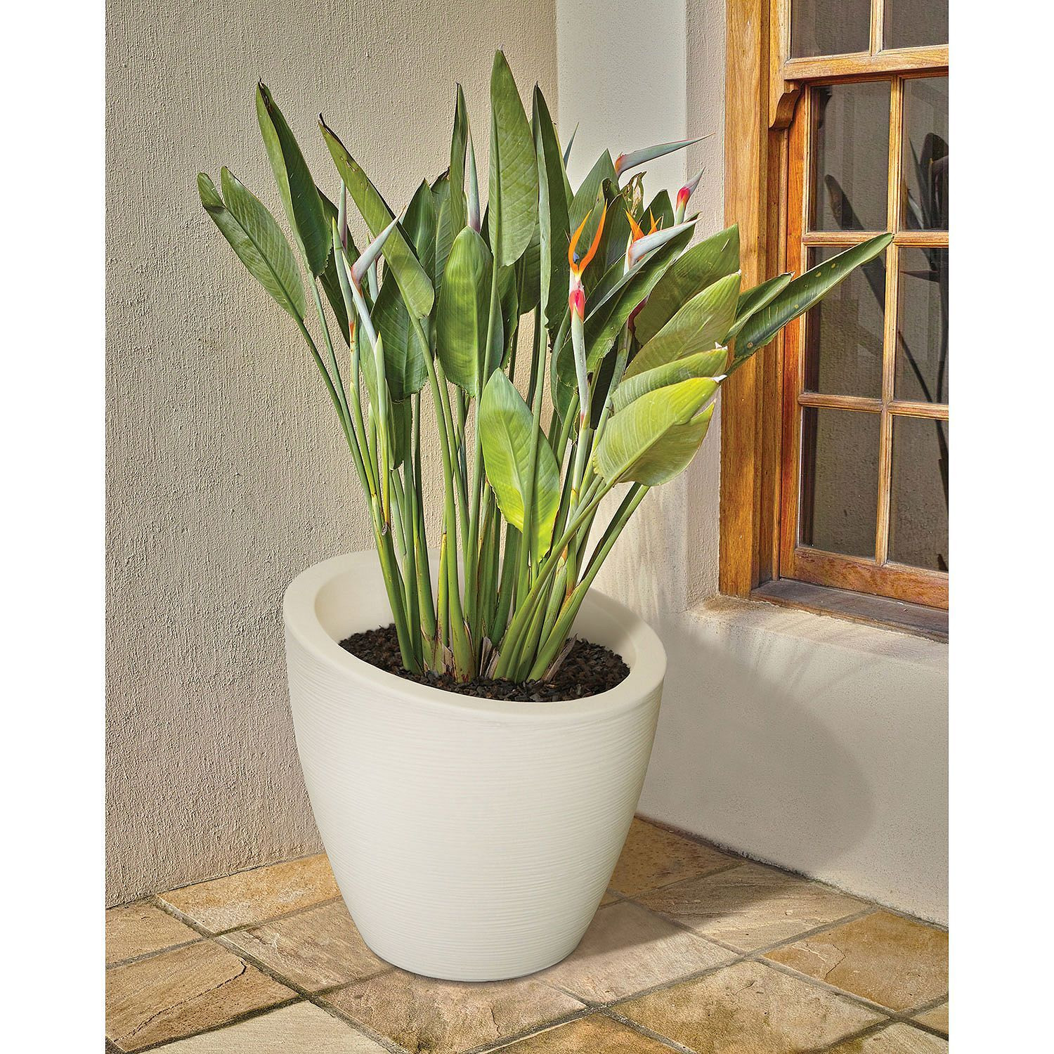 plant vase home depot of modesto 20 round planter various colors get it growin throughout modesto 20 round planter various colors sams club