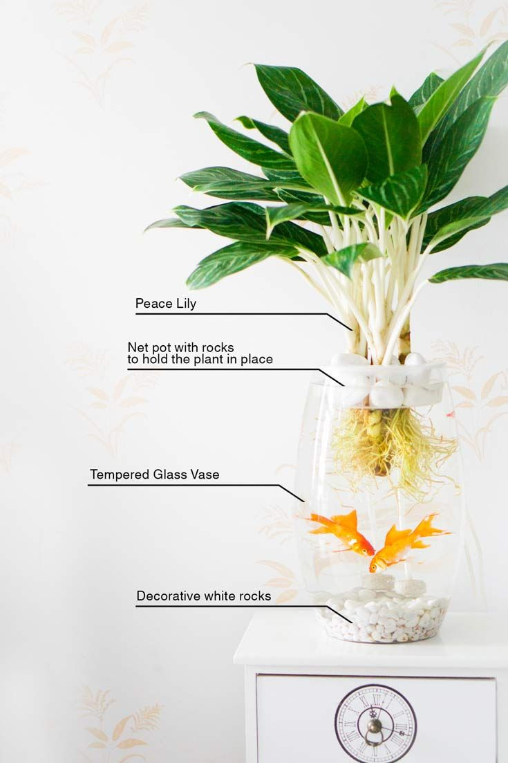 plants for betta vase of 7 best fish tank images on pinterest pertaining to how to make your own little home aquaponics set up