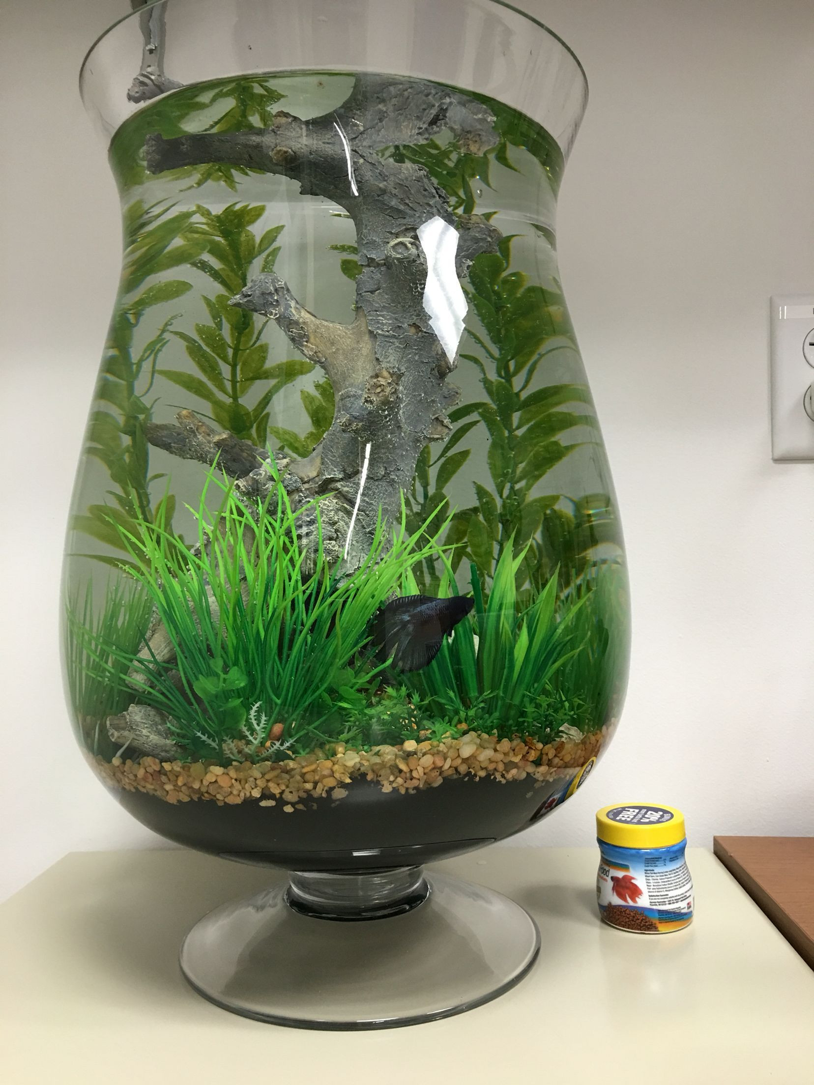 plants for betta vase of betta fish bowl decorations castrophotos pertaining to the