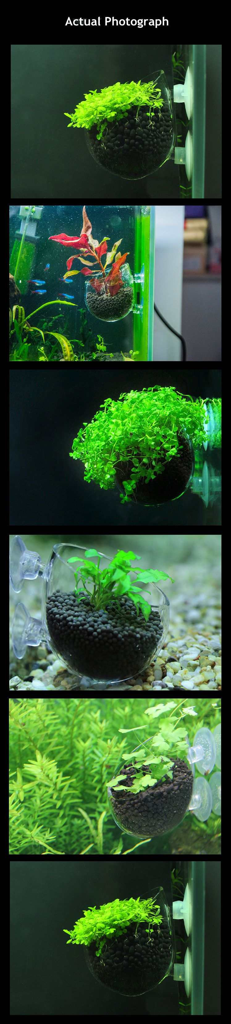 plants for bettas in a vase of aqua plant glass nursery cup water grass aquarium plants pots fish inside mei will reply to you asapthank you we promise if you are on our products our services are not satisfied please contact us and we will provide you