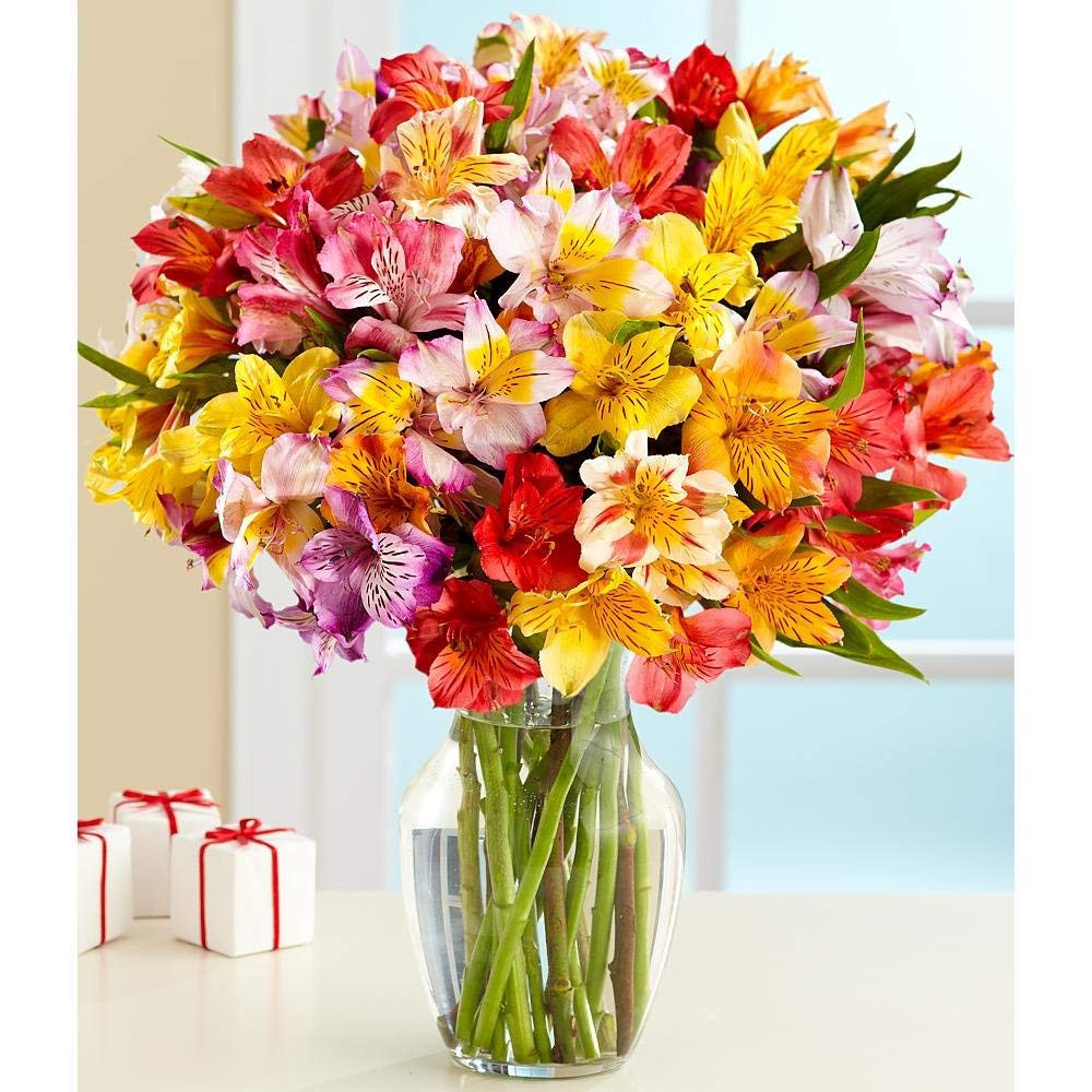proflowers 19.99 free vase of amazon com 100 blooms of peruvian lilies with free glass vase regarding amazon com 100 blooms of peruvian lilies with free glass vase flowers fresh cut format lily flowers grocery gourmet food