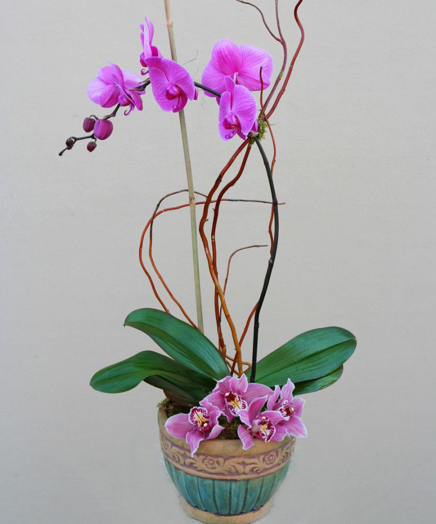 purple orchid vase of pin by ta trang on hoa lan pinterest flowers within a gorgeous purple phalaenopsis orchid plant adorned with stunning cymbidium orchid blooms around the base complete with a complementing ceramic or stone