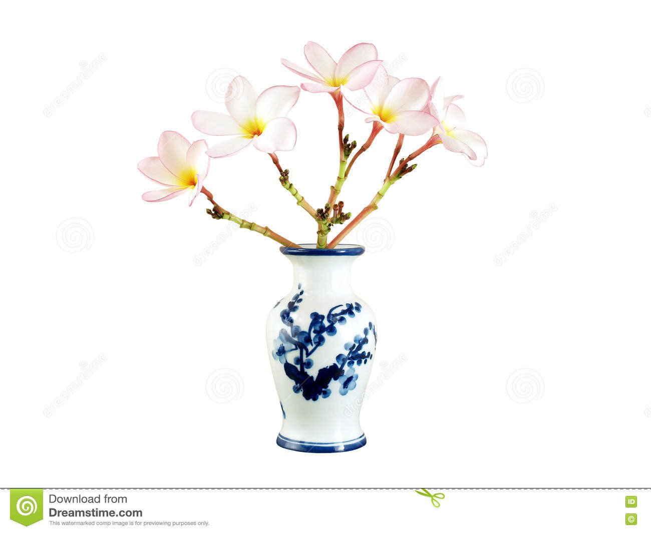 red and white glass vase of beautiful bouquet light pink plumeria or frangipani in white chinese in beautiful bouquet light pink plumeria or frangipani in white chinese vase with blue flowers pattern isolated