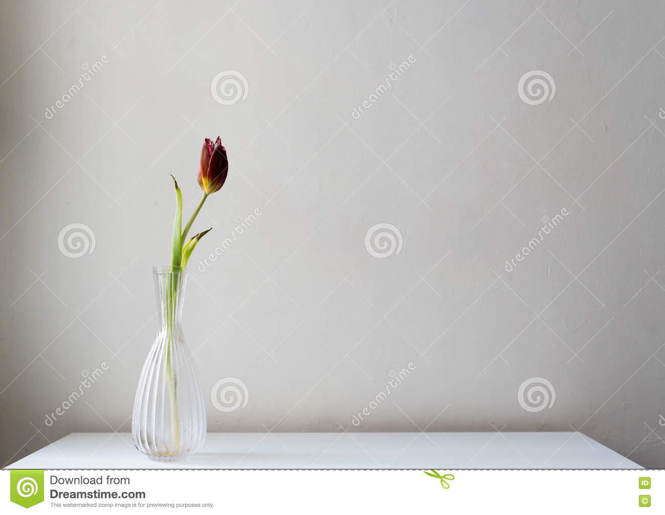 red cut glass vase of dying dark red tulip in glass vase stock image image of neutral inside download dying dark red tulip in glass vase stock image image of neutral wall
