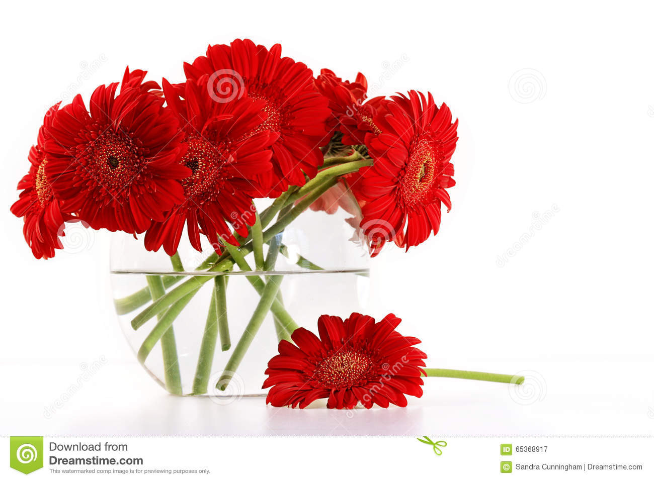 red glass vases and bowls of red gerber daisies in vase stock image image of pretty 65368917 within red gerber daisies in glass vase