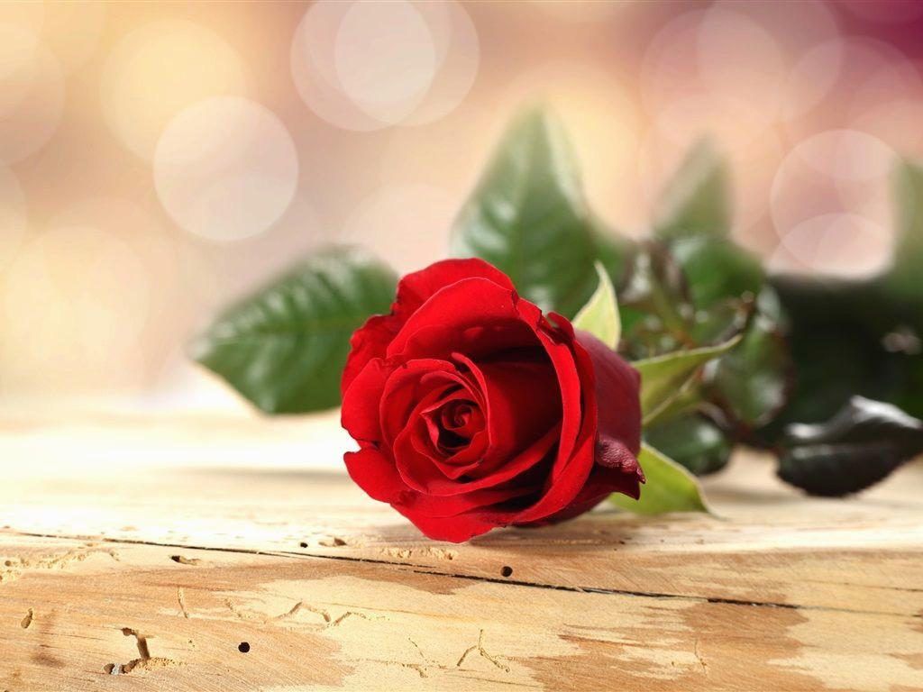 red roses in gold vase of lovely roses red in a vase singleh vases rose single i 0d invasive intended for luxury love red rose flowers pesquisa google of lovely roses red in a vase singleh vases