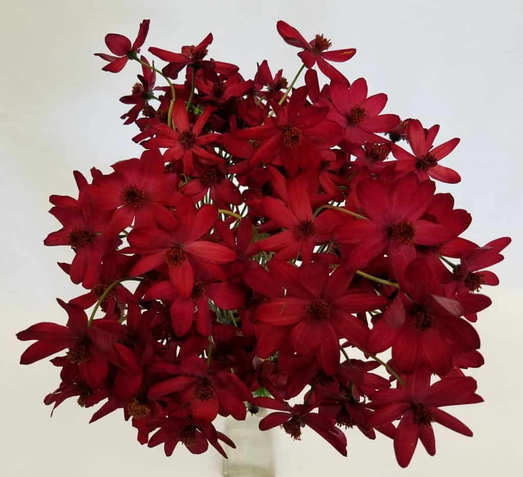ruby red bud vase of mayesh wholesale florist april 2 2018 throughout noel red cosmos